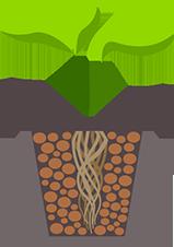 wt-root