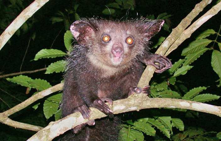 10 Strangest Animals in the Rainforest