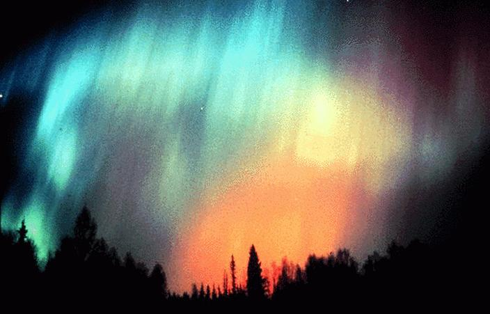 Northern Lights over silhouetted tree line