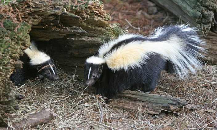 Skunk Food List
