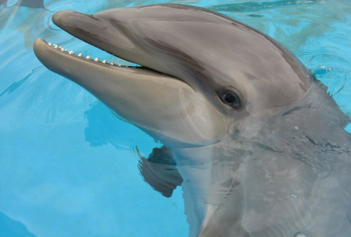 Wolphin in pool