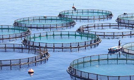 How Fisheries Can Maintain Degraded States