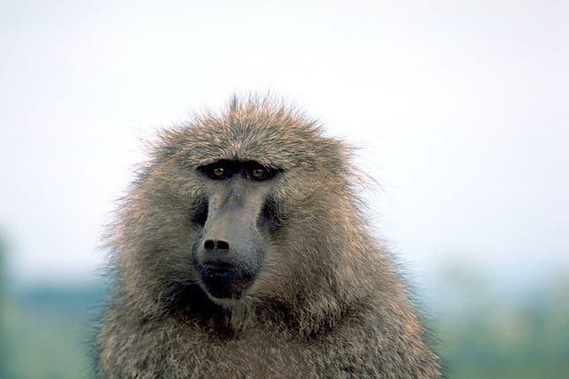 Primate Conservation Initiative