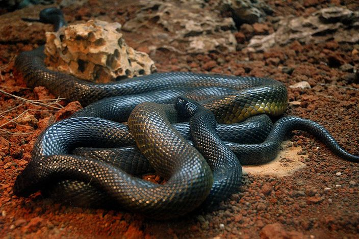Most Dangerous Snakes In The World -(pictures) - Science ...