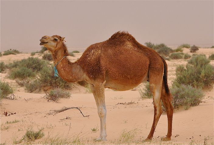 10 Incredibly Adaptive Sahara Desert Animals