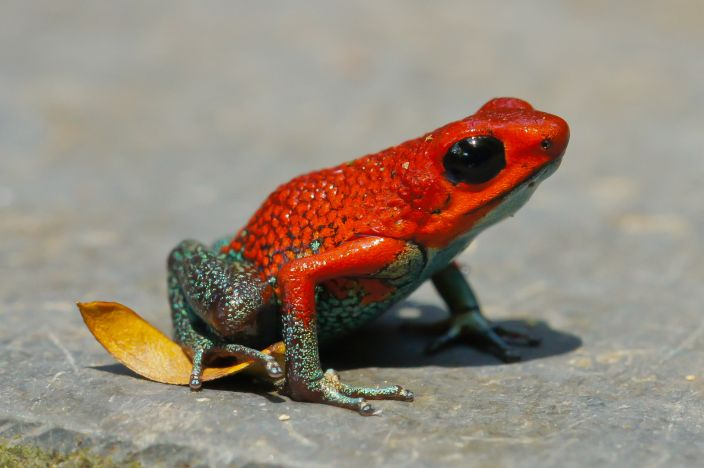 10 Most Poisonous Animals in the World