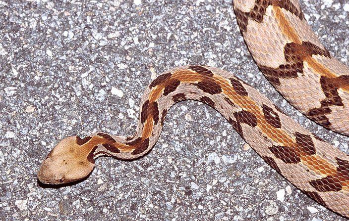 Rattlesnake (Tom Spinker/Flickr)