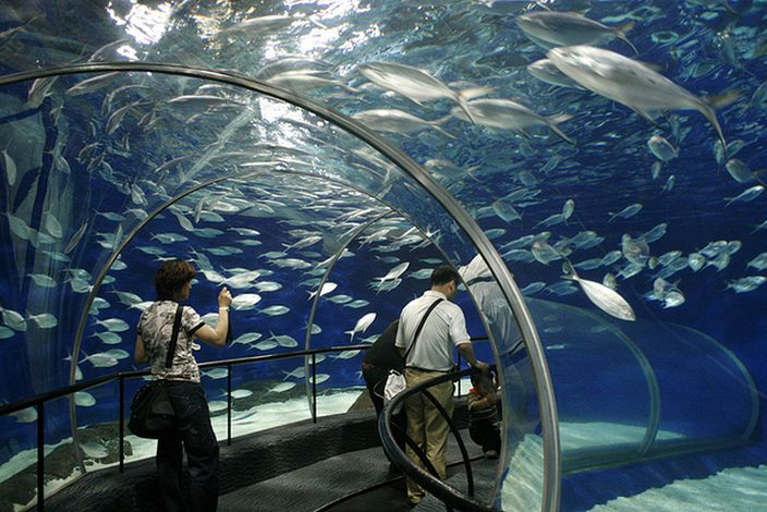 Shanghai Ocean Aquarium (Maja Bieda/Flickr)