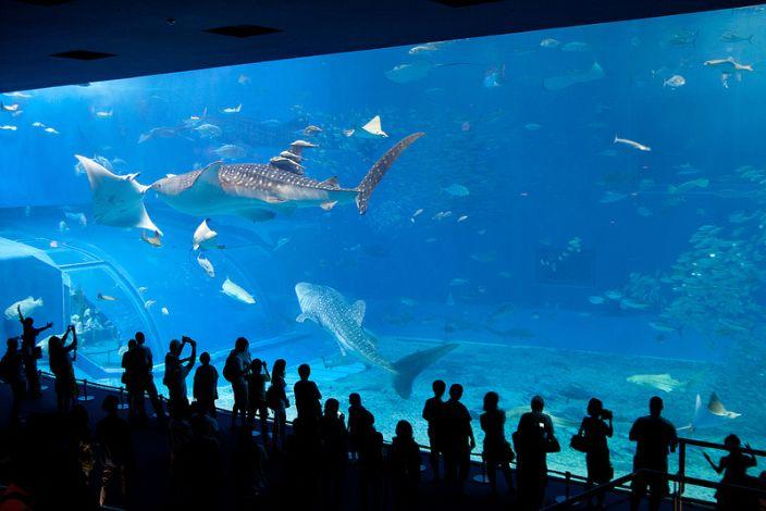 10 Largest Biggest Best Aquariums In The World