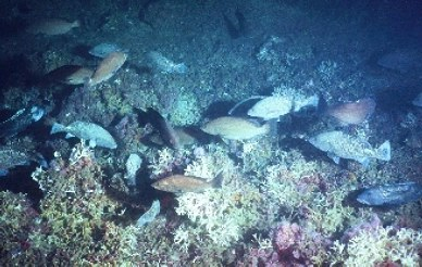 large school of fish in front of coral bed
