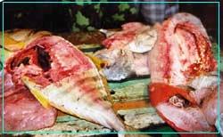 Destructive fish 5