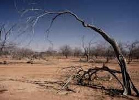 Desertification Facts, Threats, Solutions