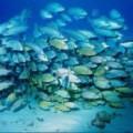 fish_populations