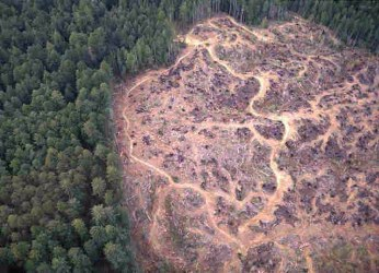 arial view of habitat loss progressing in to forest