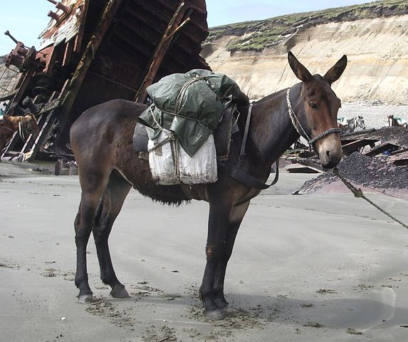 mule with a pack on its back