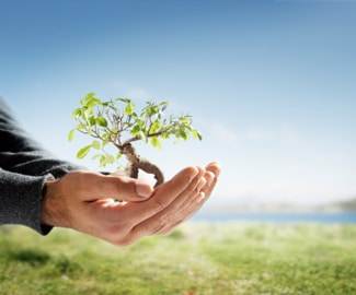 person holding small tree in their hands