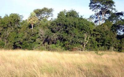 Are Grassland Animals in Danger of Losing Their Habitat?