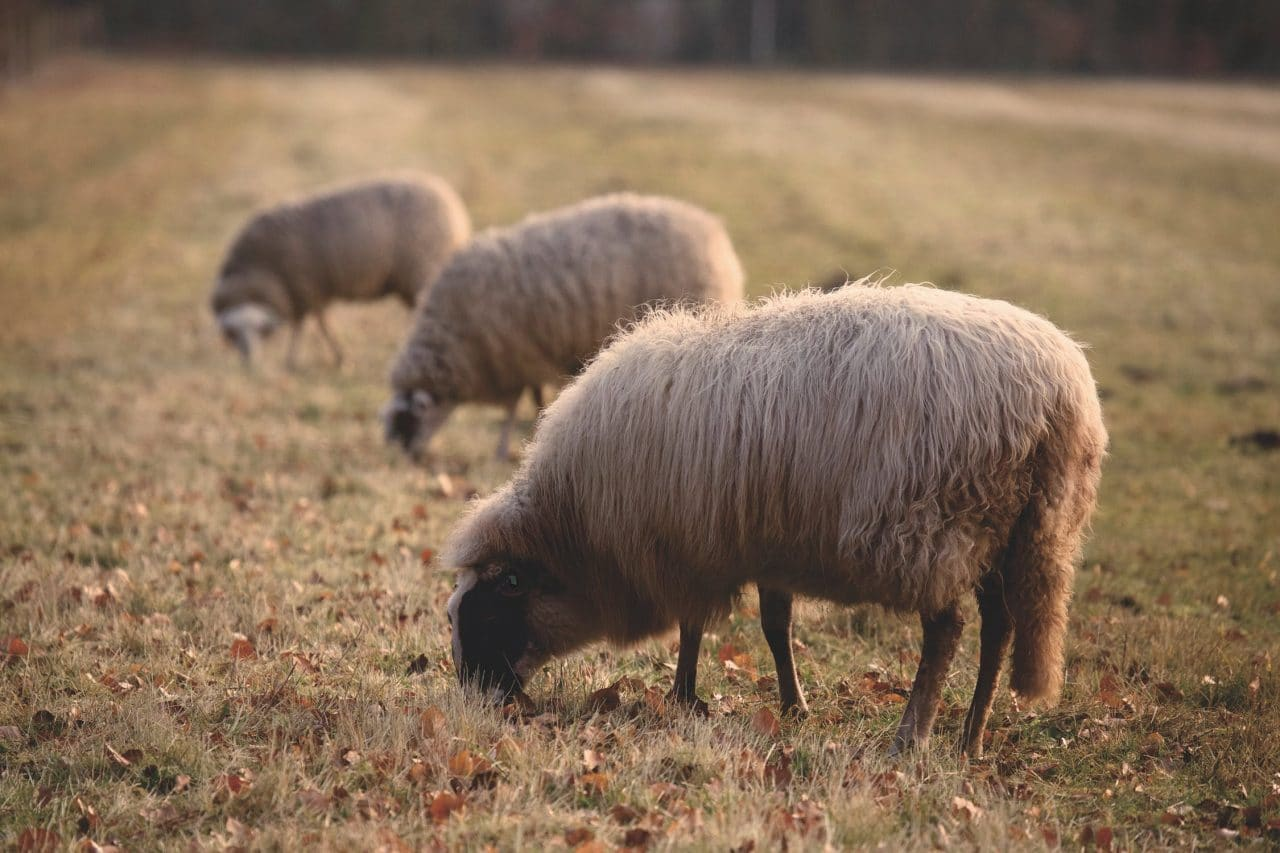 What is Overgrazing and How Does It Affect Us?