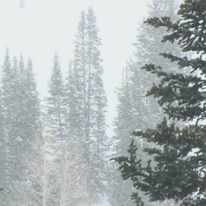 rain&snow in Coniferous forest biome