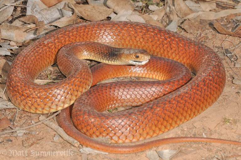 10 Most Poisonous & Most Dangerous Snakes In the World