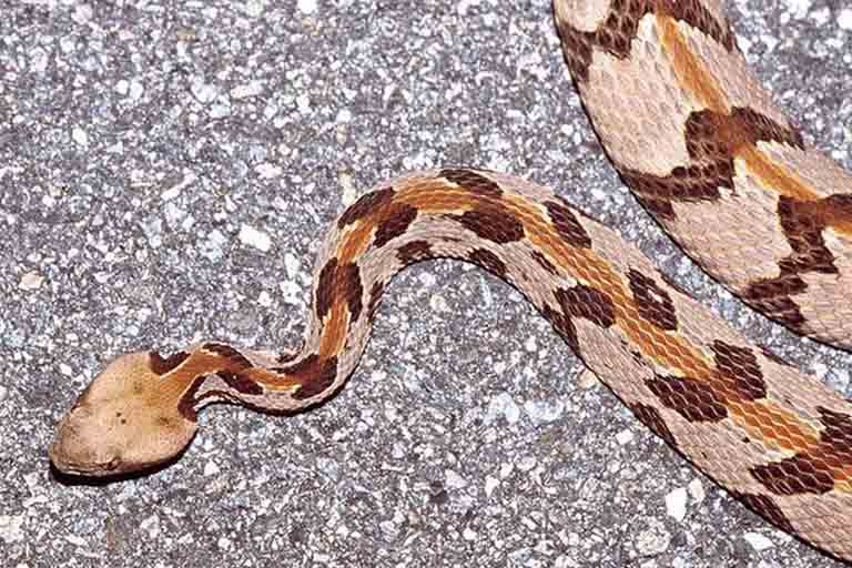 10 most poisonous most dangerous snakes in the world