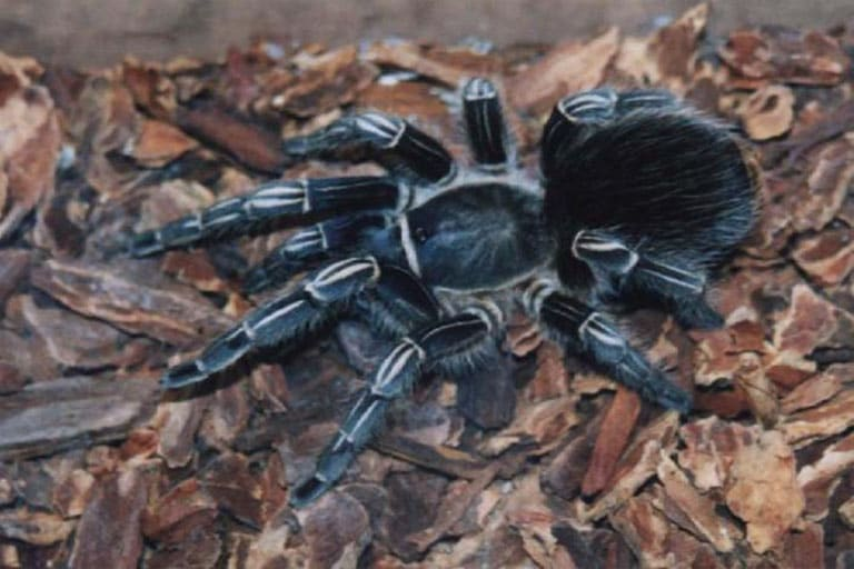 10 of the World\'s Largest Spiders