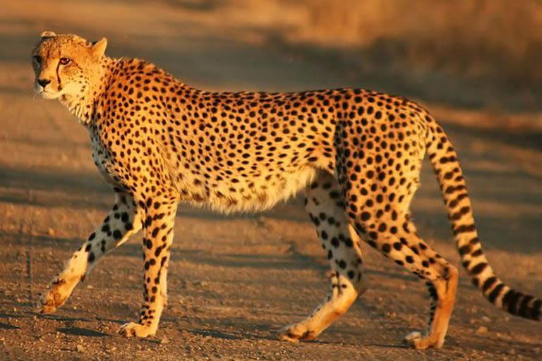 10 Fastest Animals On Earth Fastest Animals In The World