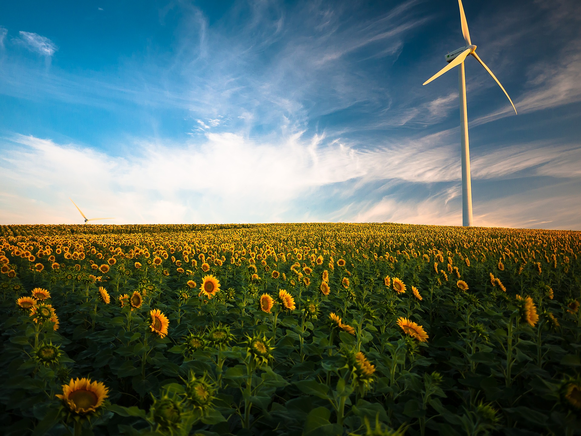 The Pros and Cons of Wind Power - Cost Effective and
