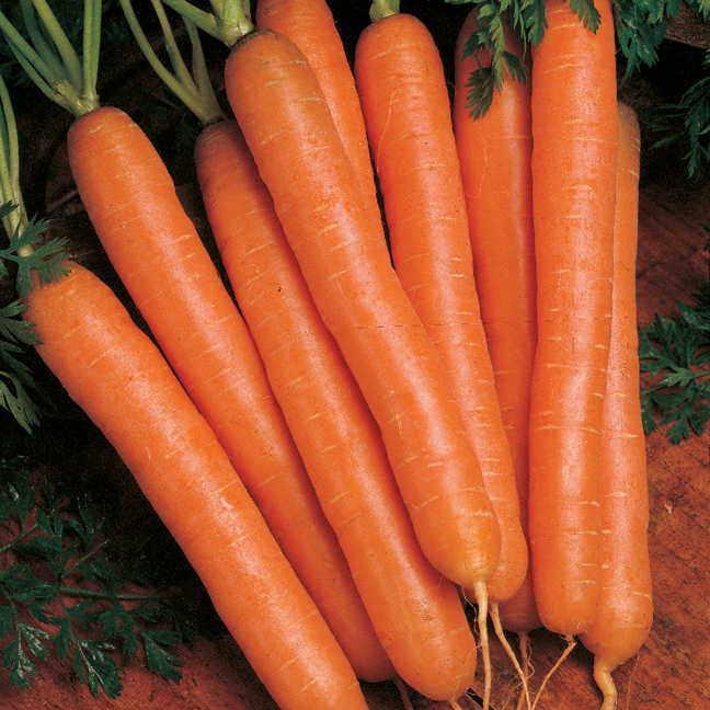 Carrots-Nantes-05741-pk-p1