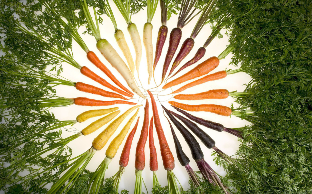 Carrot Varieties aligned in a circle