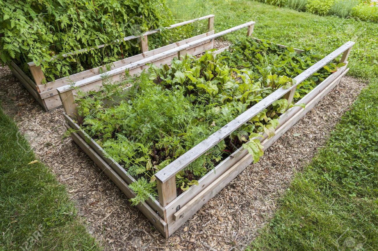 backyard carrot plant farms