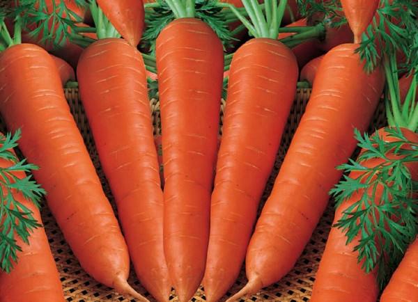 nantes-carrots